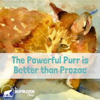 The Powerful Purr is better than Prozac